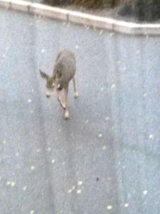 Right outside my window