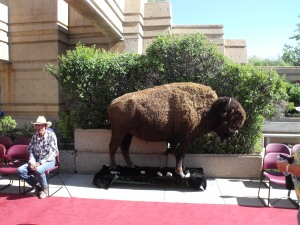 Didn't see one real Buffalo which is a shame. I guess they thought  they still may try to jump