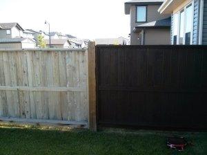 Victoria's fence