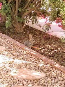 Our new pet Bunny!