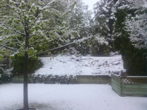 This supposed to be spring